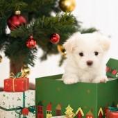 puppy gift